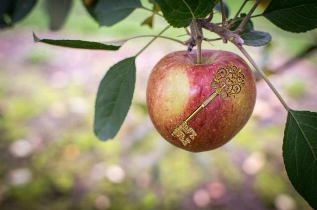 ключик в яблоке