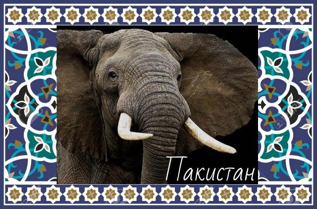 Хранитель Пакистана Слон