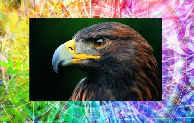 символы животных орёл