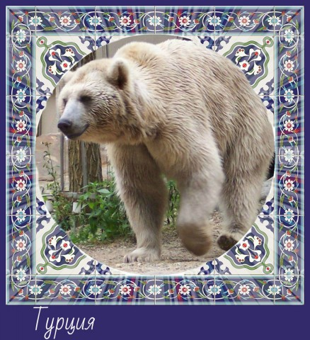 Хранитель Турции Медведь
